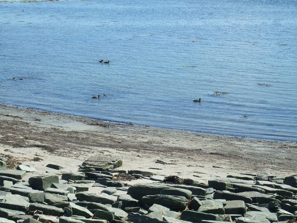 The Swandro eider duck collection