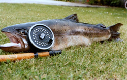 kims fish on lawn