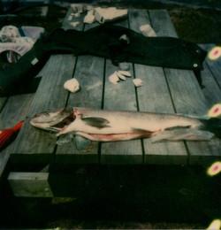 fish on caravan park table309