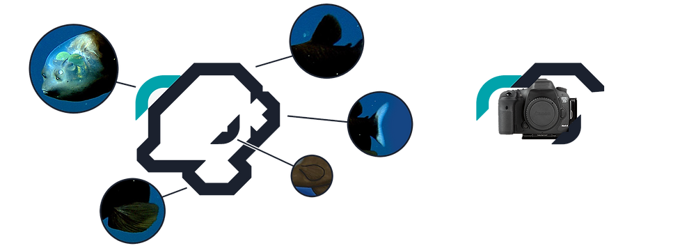 barreleye, dieresis, logo, branding agency, graphic design studio, illustration, character design, branding, brand identity, logo design, brand consulting, icon, iconography, graphic design, mtconsulting
