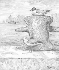 Gulls at Mallory Dock