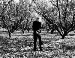 Harry Perriam's Orchard