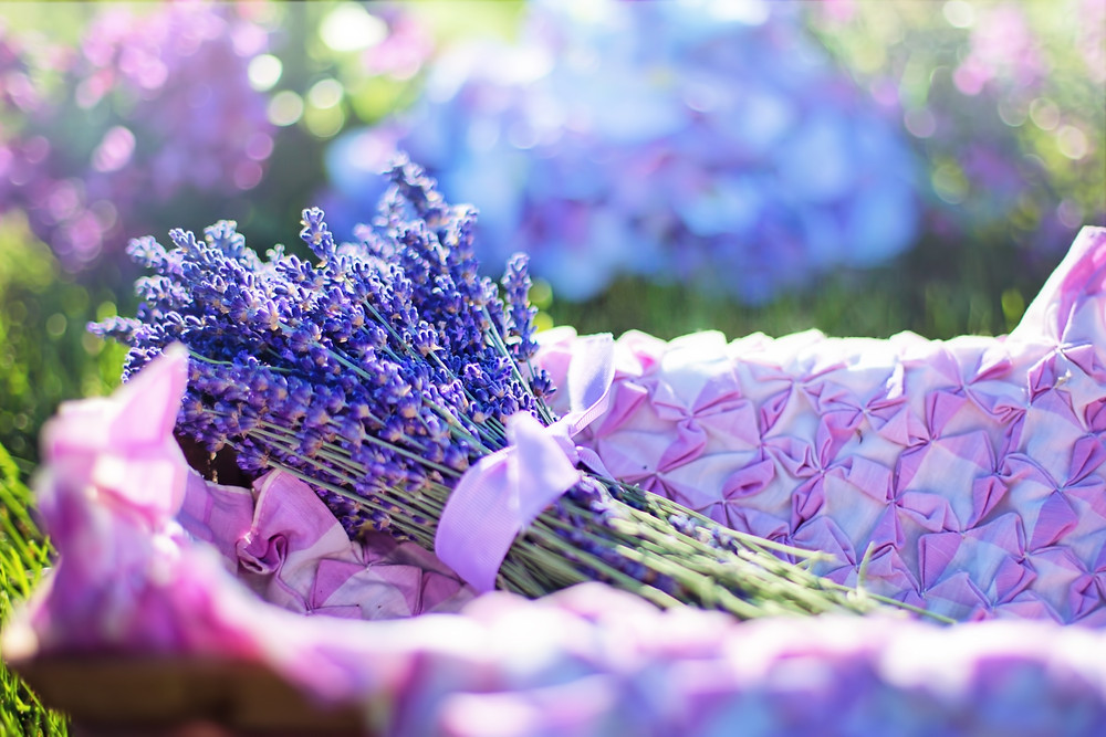 lavender, plant