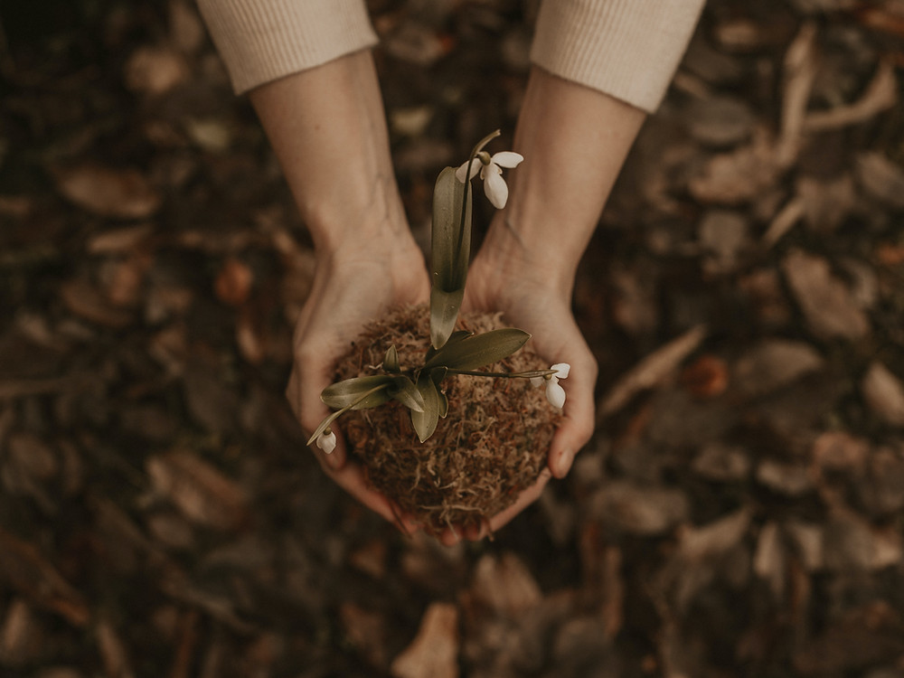 Woman's hands holding plant and nature