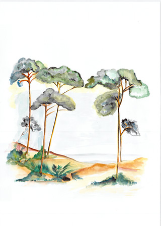 Les pins d'Arcachon