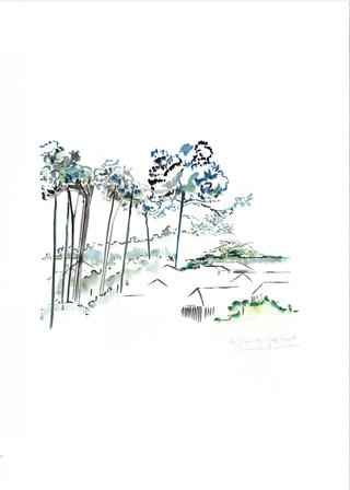 les pins Cap Ferret