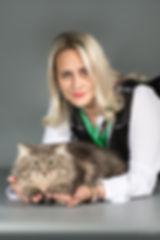 Купить сибирского котенка, питомник сибирских кошек Большая Радость