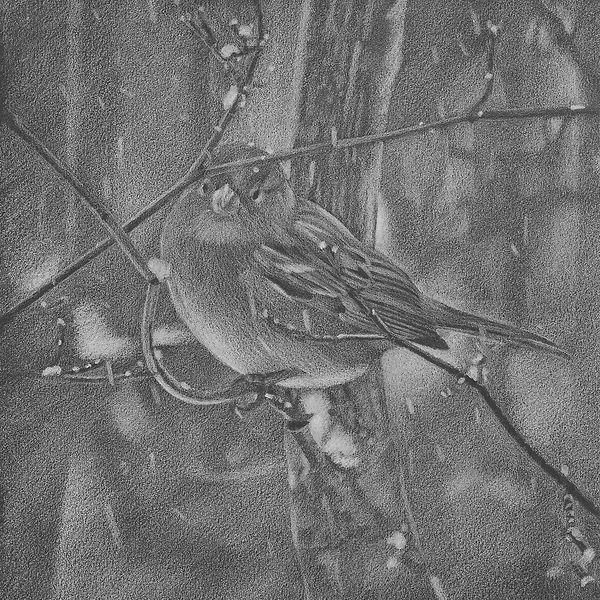 Bird in Snow.5,3.crop.jpg