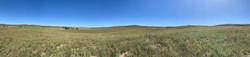Sharptail_Panorama