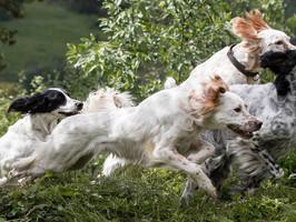 Kjære alle hundevenner! Stokkmarka er i endring....