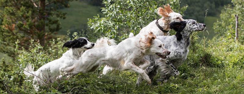 Stokkmarka fuglehundsenter