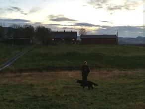 Valpesamling på Stokkmarka