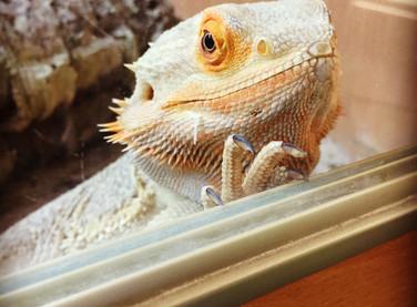 Lizards, e-Sports, and data analytics