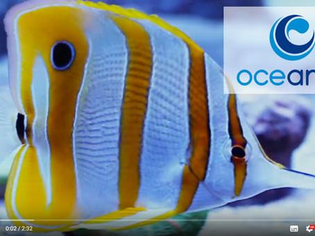 Willkommen bei Oceamo!