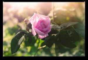 Why It's Imperative You Prune Your Bush blog article by Karan Scott of Karan Scott Coaching | Kettering 01536 601749