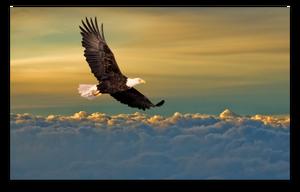 Make Like An Eagle And Rise Above blog article by Karan Scott of Karan Scott Coaching, Kettering | 01536 601749