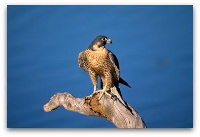 The Falcon And The Branch blog shared by Karan Scott of Karan Scott Coaching   Kettering 01536 601749