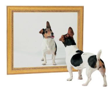 What The Happy Dog Saw blog article by Karan Scott of Karan Scott Coaching | Northants 01536 601749