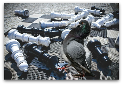 Why Arguing With Fools Is Life Playing Chess With a Pigeon blog article by Karan Scott of Karan Scott Coaching, Kettering | 01536 601749