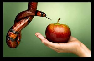 Change Is Possible, But Willpower Alone Is Not Enough blog article by Karan Scott of Karan Scott Coaching, Kettering | 01536 601749