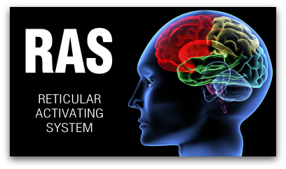 How Your Reticular Activating System Works - And Why You Want To Know This blog article by Karan Scott of Karan Scott Coaching | Kettering 01536 601749