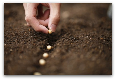 What Are You Planting? blog article by Karan Scott Coaching | Northants 01536 601749