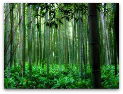 The Fern & The Bamboo fable, shared by Karan Scott Coaching | Kettering 01536 601749