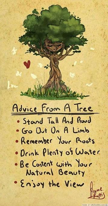 tree-advice.jpg