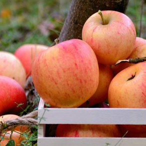 The Apple Fayre and Tring's Orchards