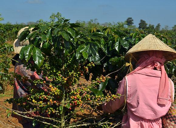 Sumatra Mandheling Dark Roast 16oz