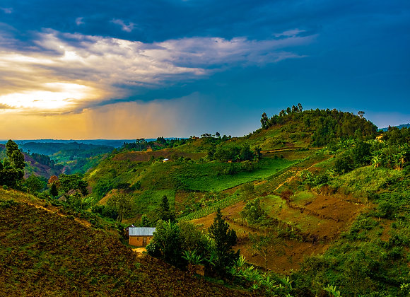 Rwanda Dry Process Rusizi Nyakarenzo