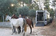 unloading horses.jpg