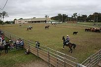 Livestock - team penning.jpg