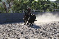 5) Local rider Clint McErvale bends his