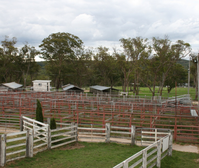 Cattle yards - compressed.jpg