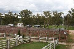 Cattle yards - compressed.jpg