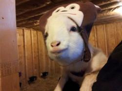 Saydee in her monkey hat