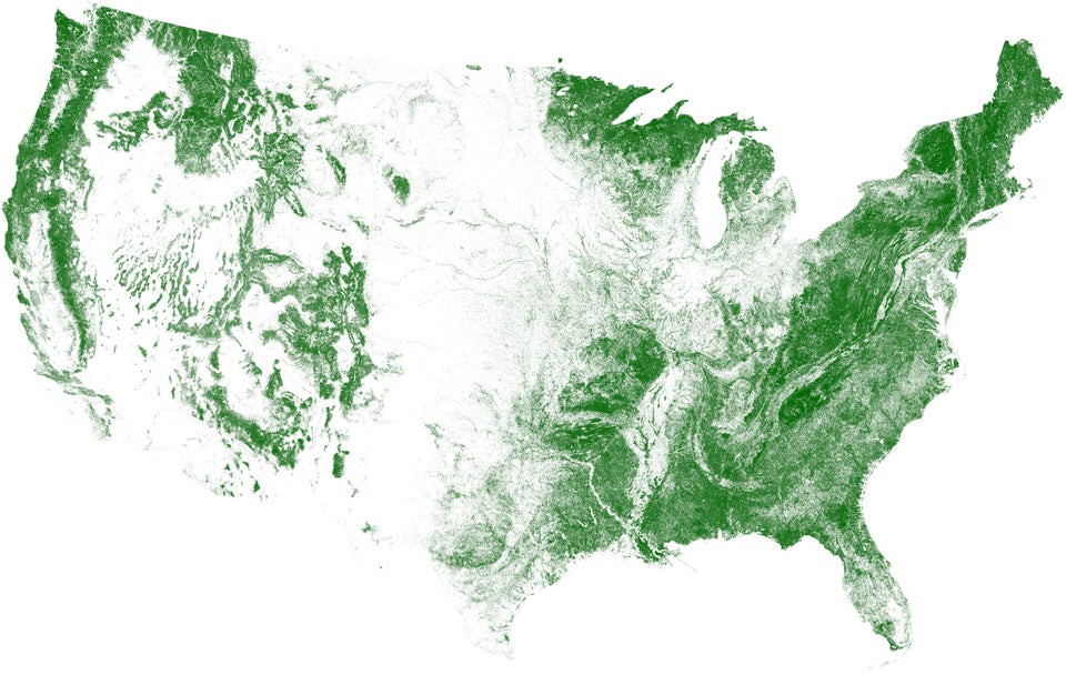 US by Tree Cover.jpg