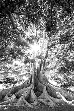 Roots Wurzeln Baum