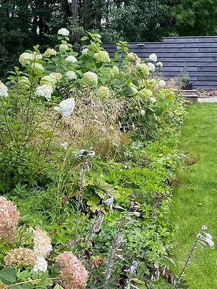 Фотография изящного и пышного бордюра из гортензий и других растений