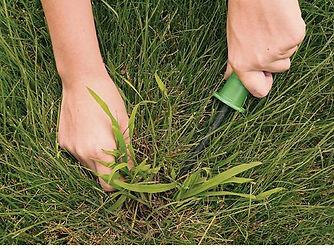 изображение борьбы с сорняками