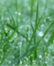 монтаж системы автоматического полива газона или автополива rainbird в Киеве. Заказать проект и монтаж системы автоматического полива газона или автополива по лучшей цене можно у ландшафтной компании Ваш Новый Сад.  В цену за монтаж системы автоматического полива производителей оборудования gardena, hunter или rainbird за 1 кв метр включен проект