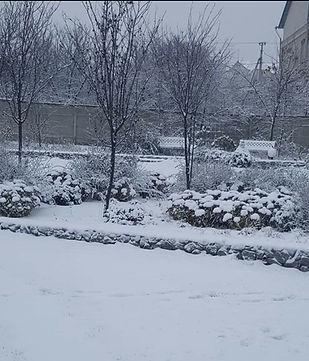 Лаванда в ландшафтном дизайне зимнего сада
