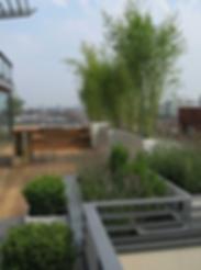 Озеленение крыши в Киеве на фото с растениями и горшками