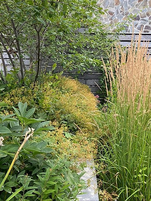 Дачный сад фото 00011.jpg