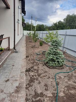 Фотография посадки хвойных деревьев и ра