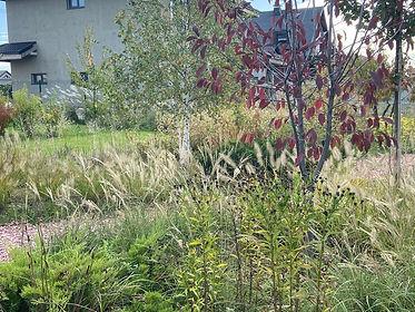 Цветы в саду на фото 1232