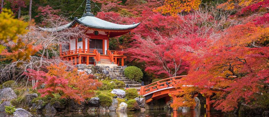 Опадание японского клена. Здравствуй Япония