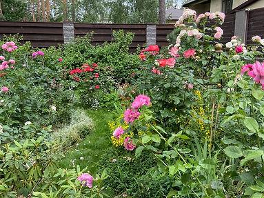 почвопокровные розы в дизайне сада фото