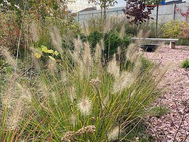 современный сад ландшафтный дизайн фото 733